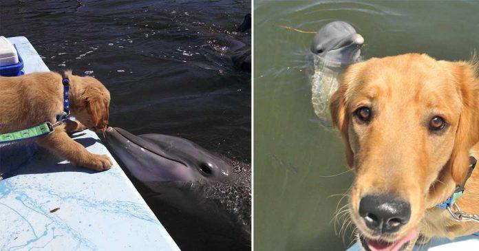 Hermosa amistad de un perro y un delfín se vuelve viral