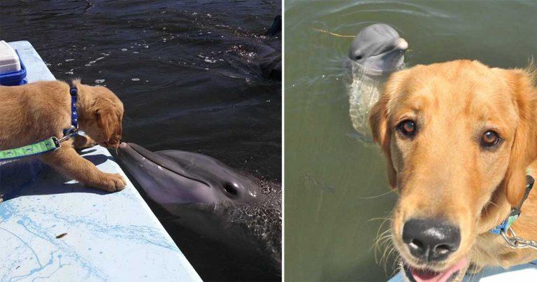 La hermosa amistad de un perro y un delfín se vuelve viral