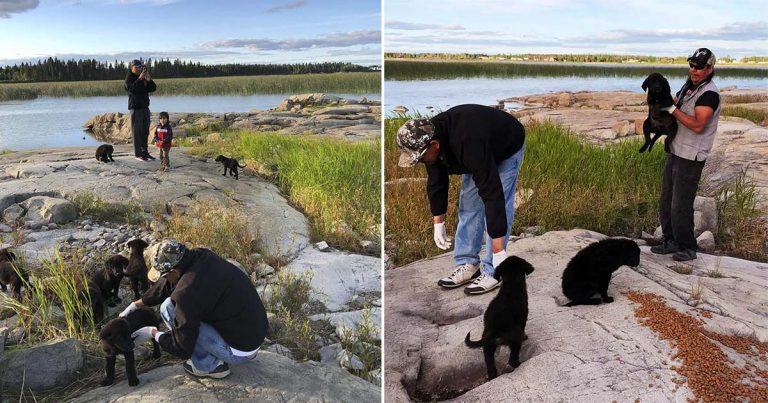 Hombre encuentra a siete cachorros abandonados en una isla deshabitada