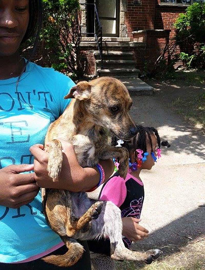 Otro perro rescatado
