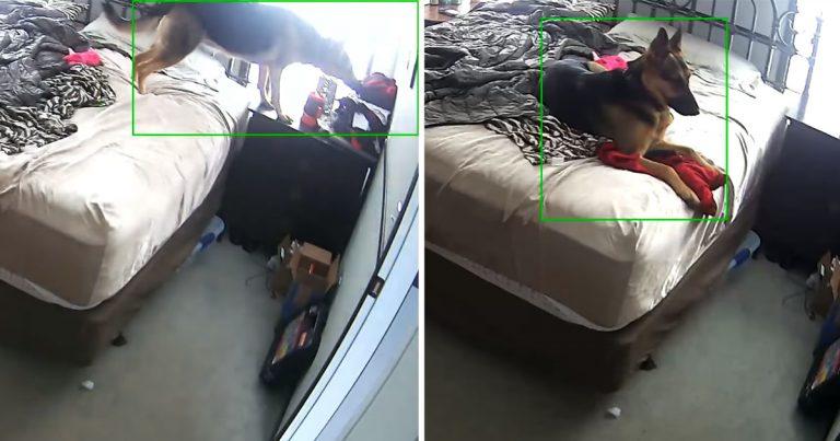 Perro es captado en cámara abrazando la ropa de mamá mientras está lejos