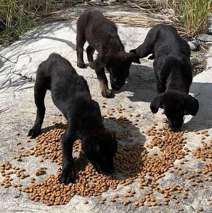 Perritos comiendo