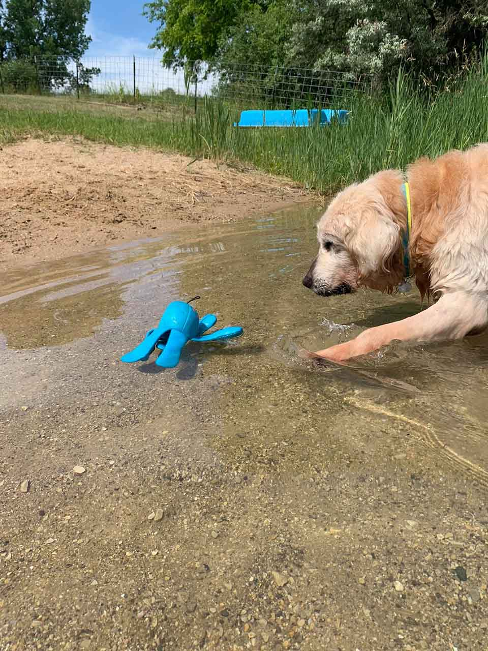 Perro adora su juguete