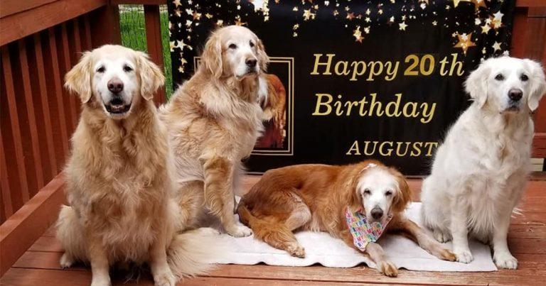 Perro que cumplió 20 años se convierte en el Golden Retriever más antiguo de la historia