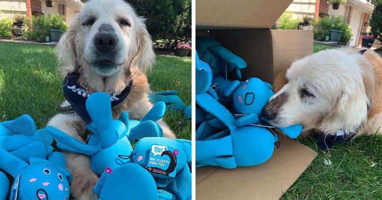 Perro mayor rescatado escoge un juguete en la tienda para mascotas y no lo deja ir