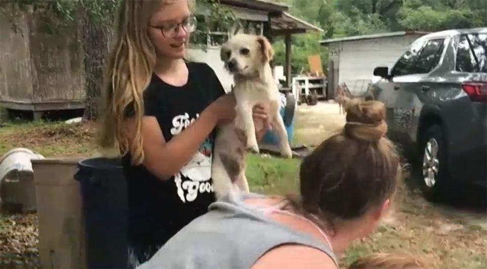 Perro pequeño de Marshal