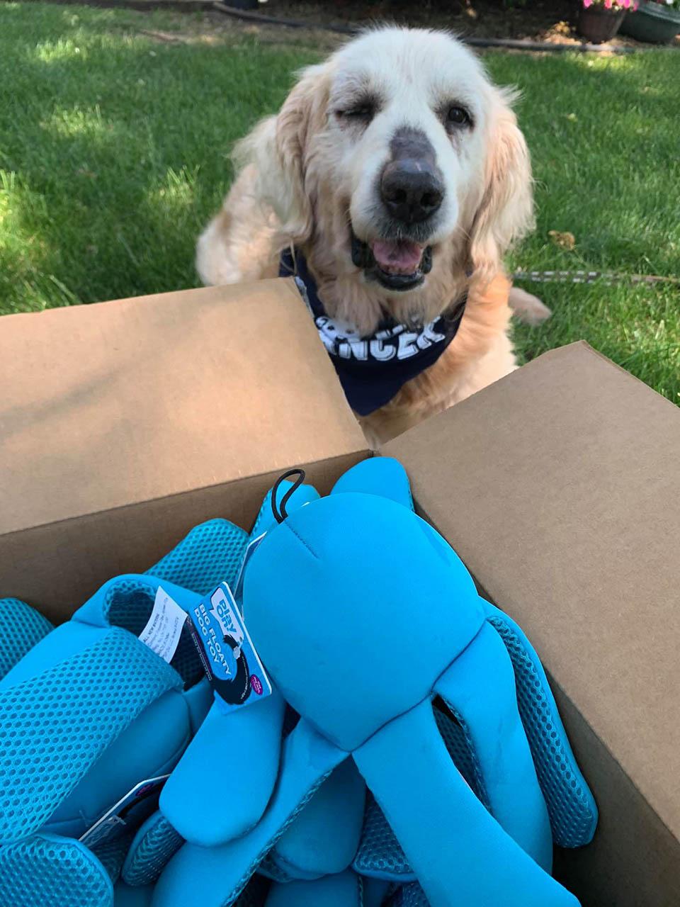 Perro recibe juguetes