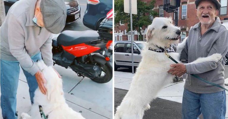 Perro se reúne con su vecino favorito que estuvo enfermo durante meses