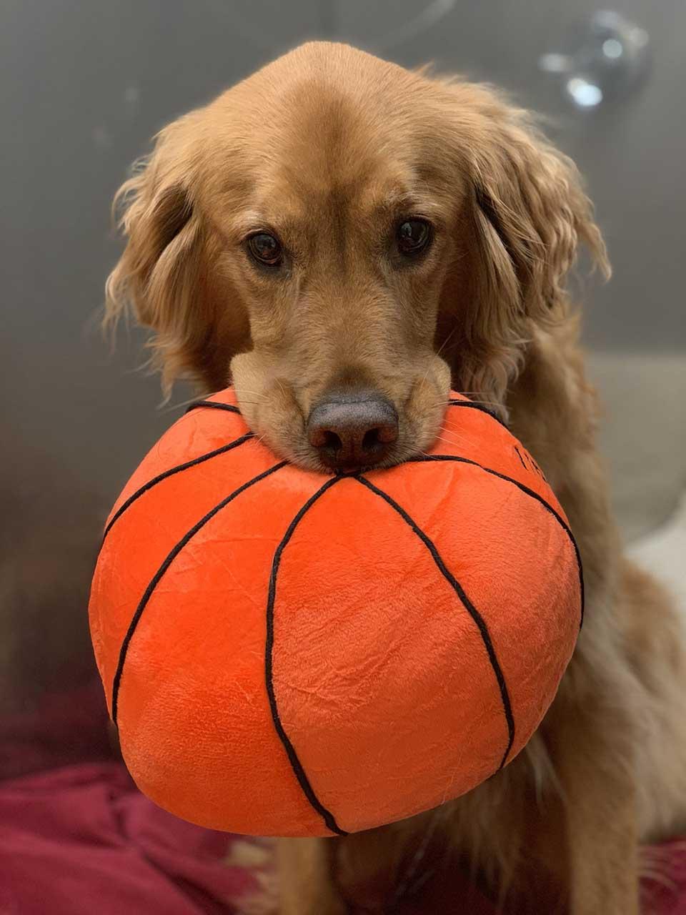 Perro y balón