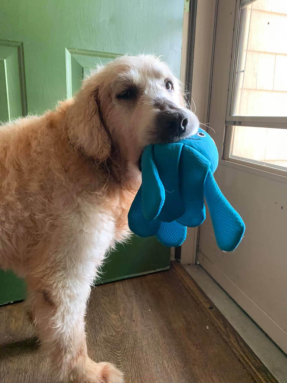 Perro y su juguete