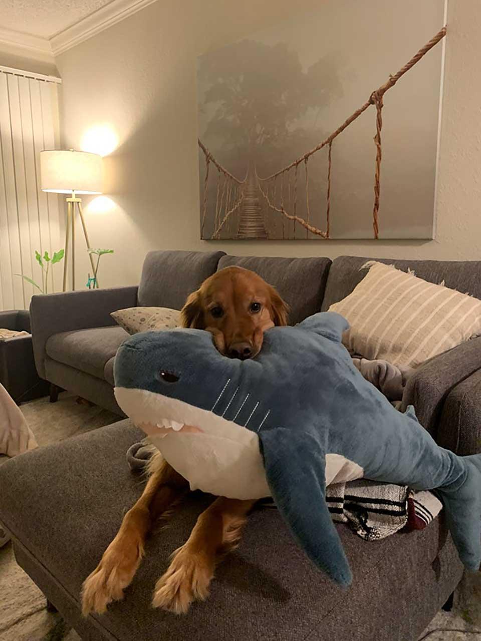 Tiburón de peluche