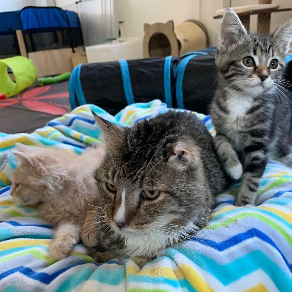 Tiernos gatitos