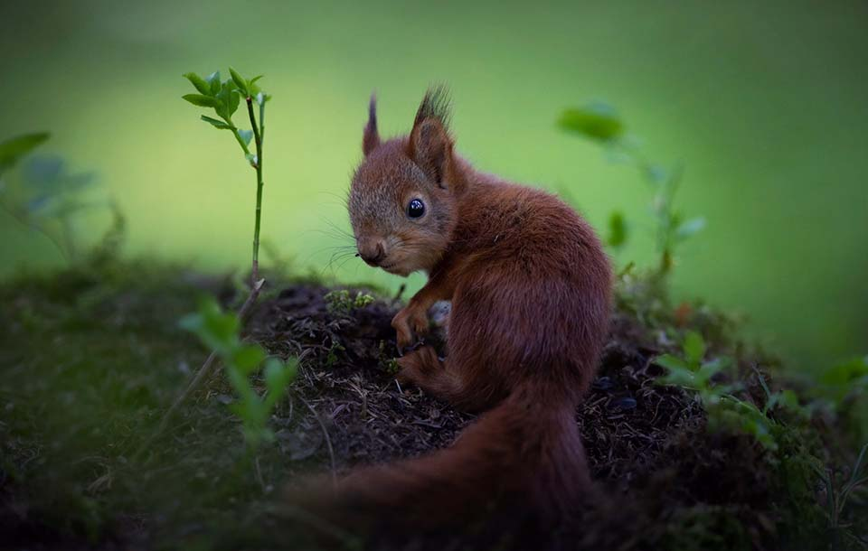 Ardilla curiosa en bosque