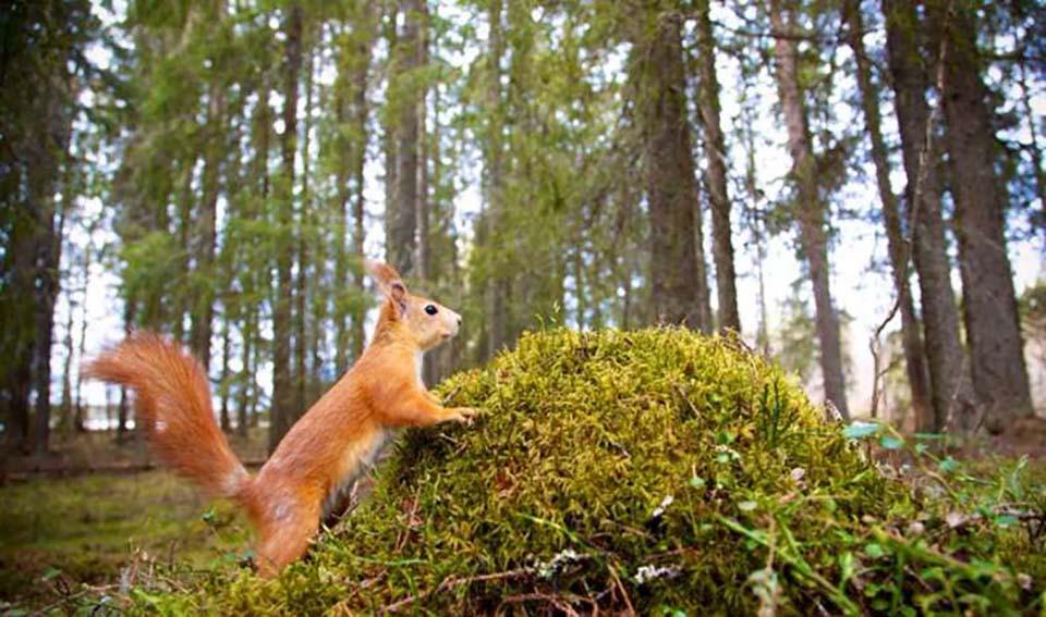 Ardilla en el bosque