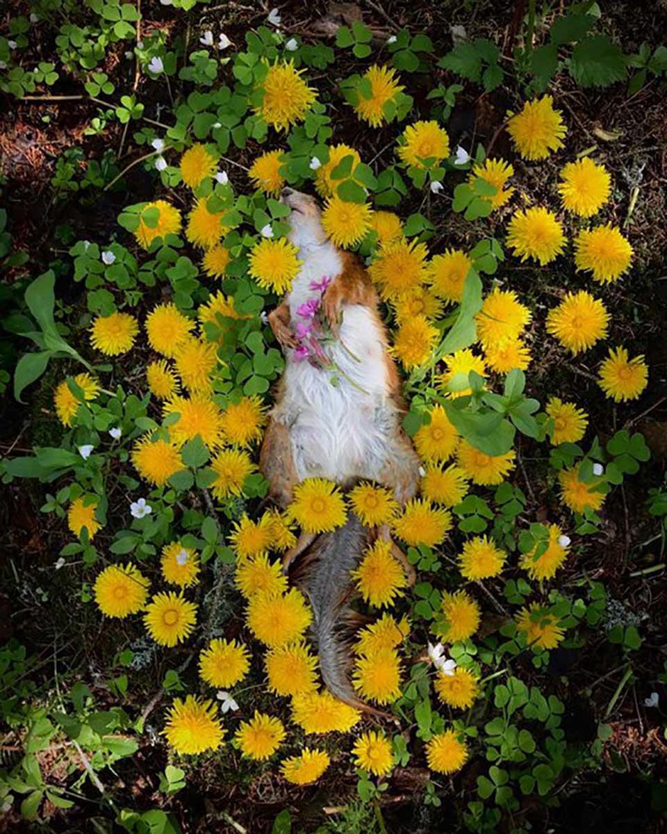 Ardilla entre flores