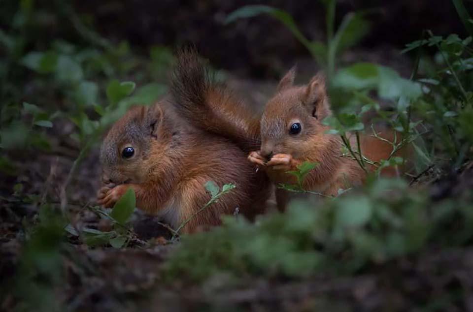 Ardillas cenando