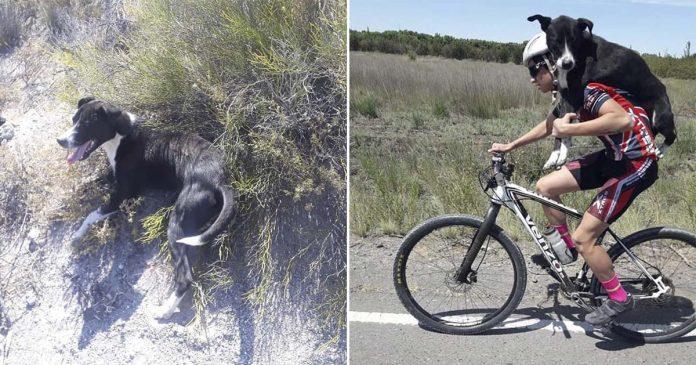 Ciclista se detiene para ayudar a un perro