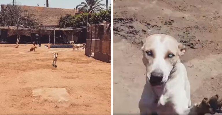 Perro ciego del refugio siempre corre cuando escucha la voz de su mejor amigo