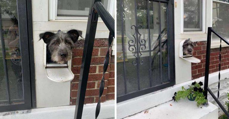 Perro se da cuenta de que el buzón es la manera perfecta de saludar al vecindario