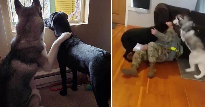 Perros están tan emocionados cuando mamá llega a casa