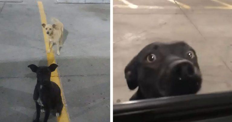 Perros rescatados en un estacionamiento buscaban la ayuda de todo el que pasaba