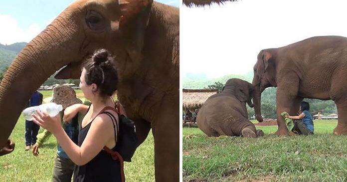 Elefante empuja a los visitantes para que cuidador pueda cantar a su bebé