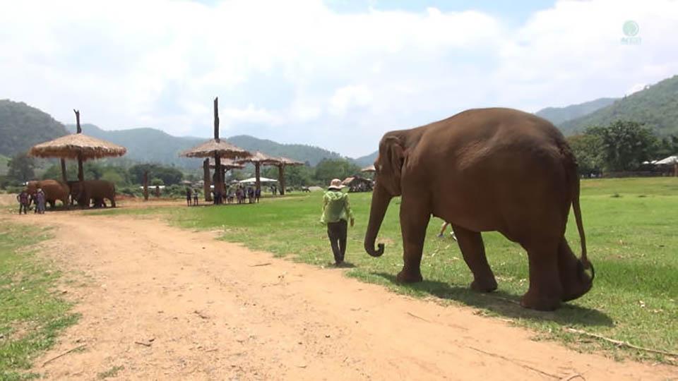 Elefante empuja a personas