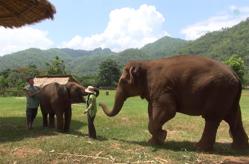 Elefantes de santuario