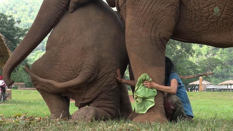 Elefantes y cuidador