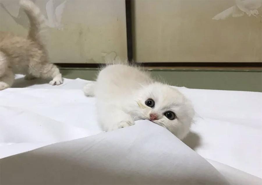 Gatito en la posada