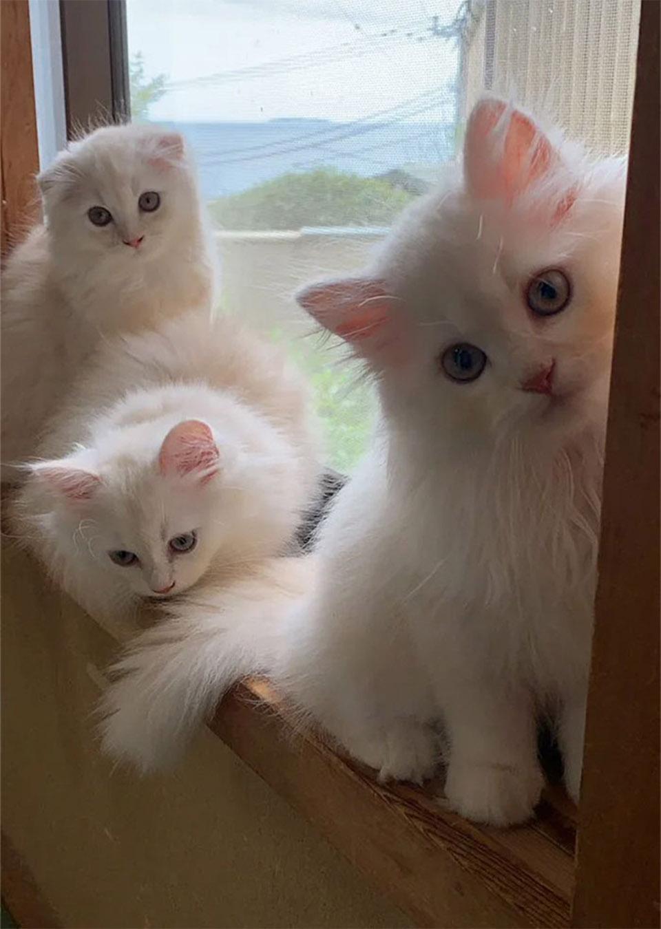 Gatitos en posada
