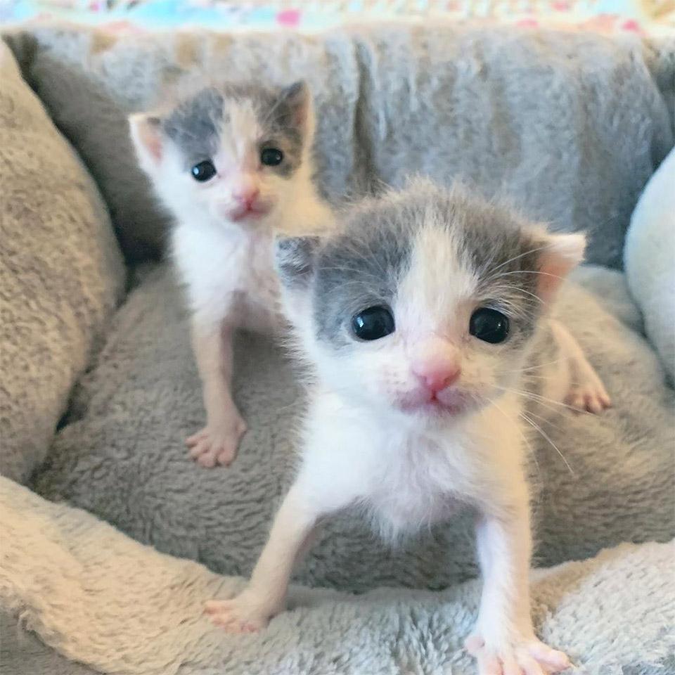 Gatitos gemelos hermanos