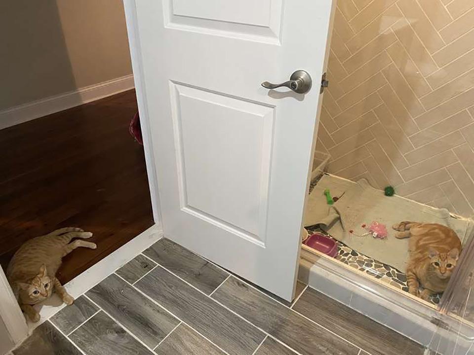 Gato abre a porta do chuveiro
