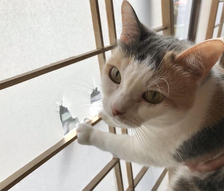 Gato compañero