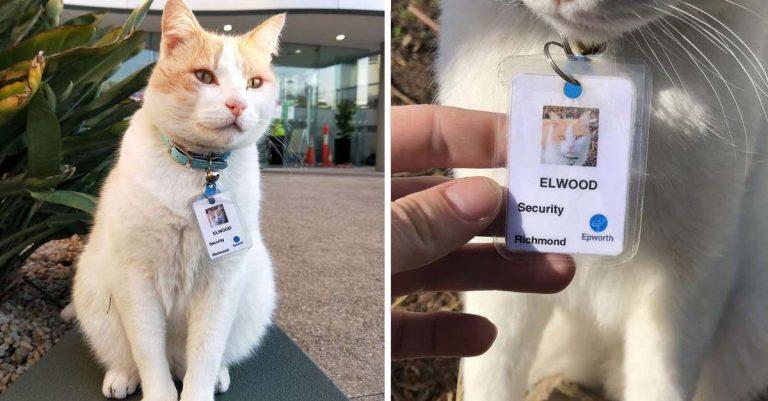 Gato se queda en el hospital tanto tiempo que consiguió su propio trabajo