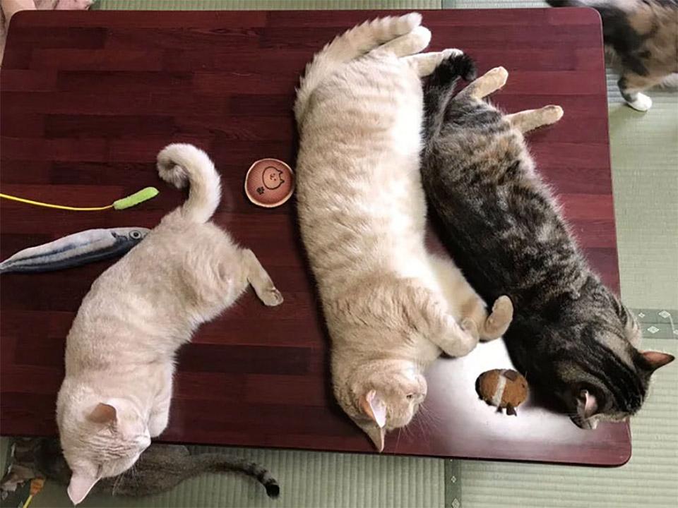 Gatos en la mesa