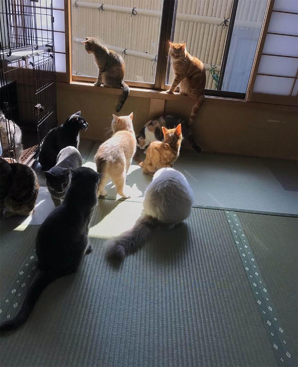 Gatos en posada japonesa