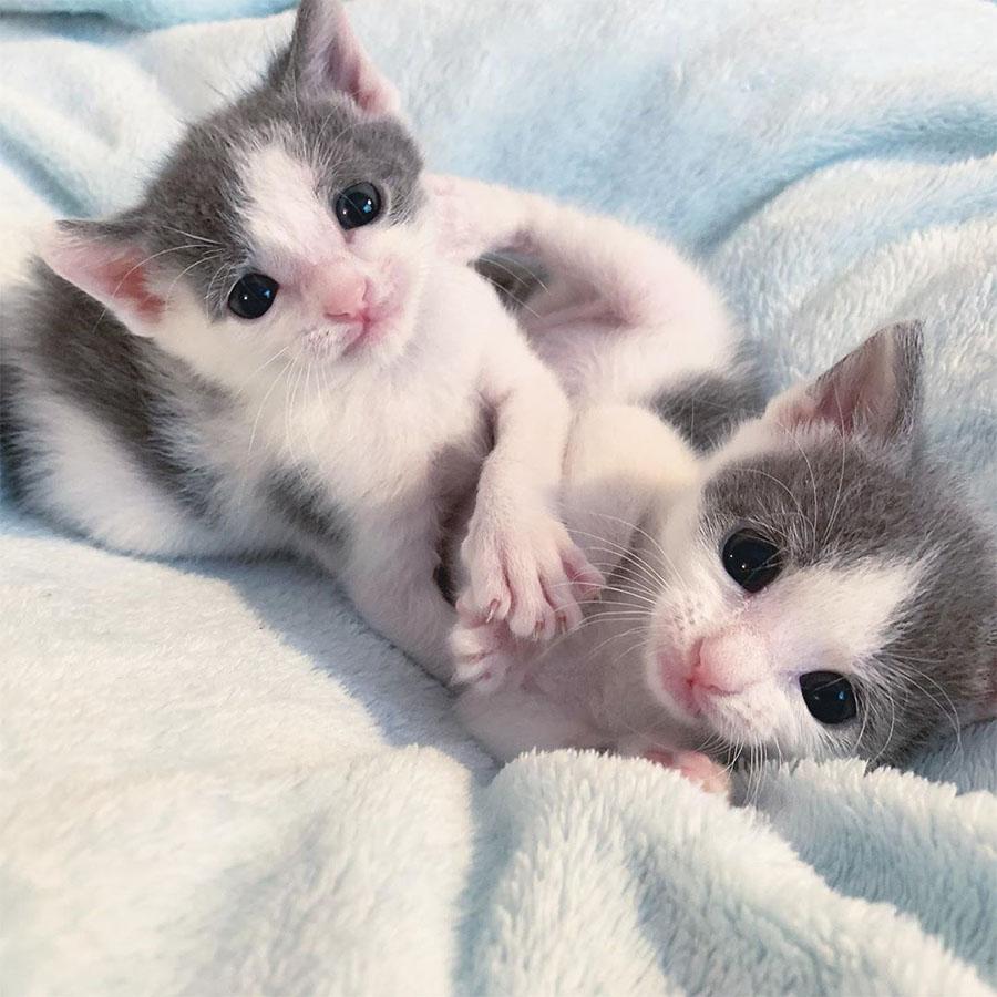 Hermanos descansando