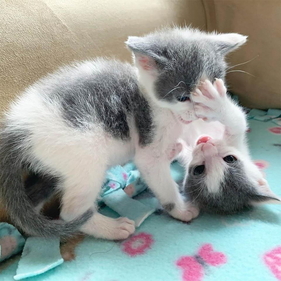 Hermanos peleando