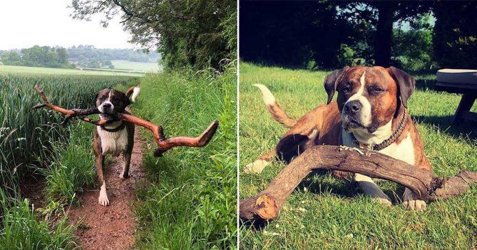 Hombre rescata perro y este agradece con palos