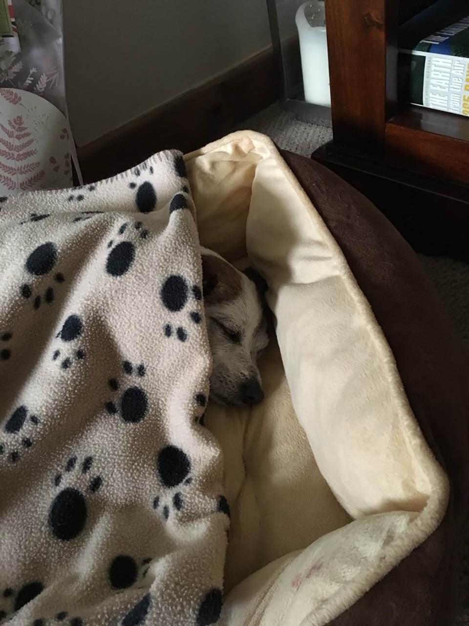 Neville duerme