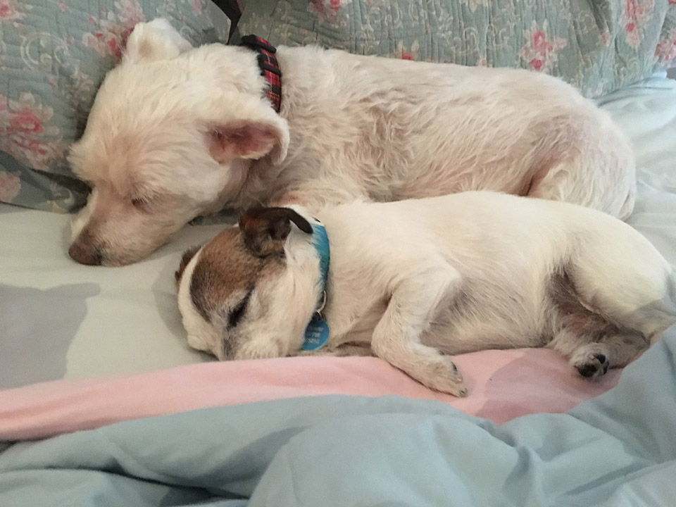 Neville durmiendo con hermano