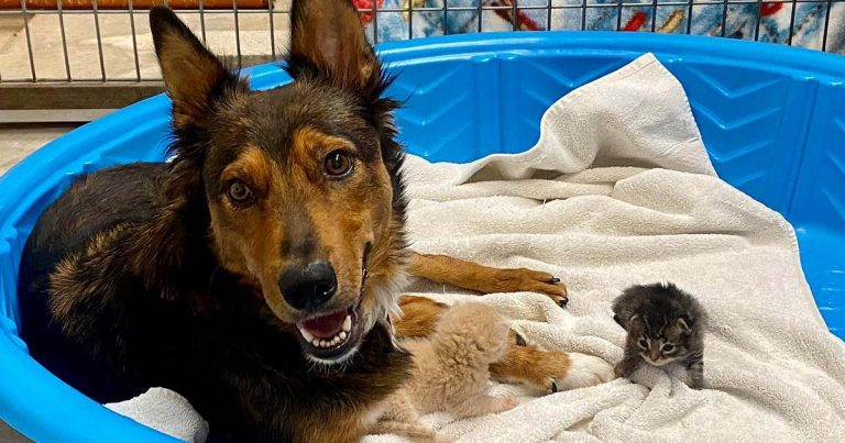 Perrita rescatada que perdió a sus cachorros adopta a tres gatitos huérfanos