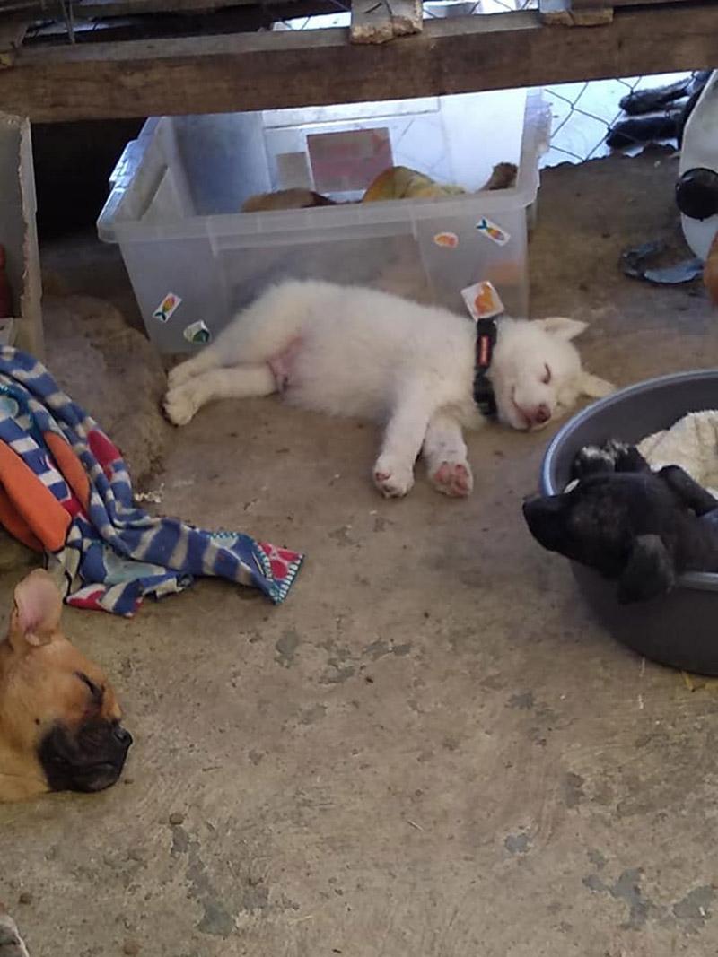 Perrito dejado en el refugio