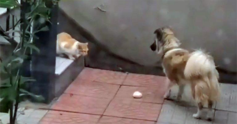 Perrito amable le da su comida a un gato sin hogar después de encontrarlo en el patio