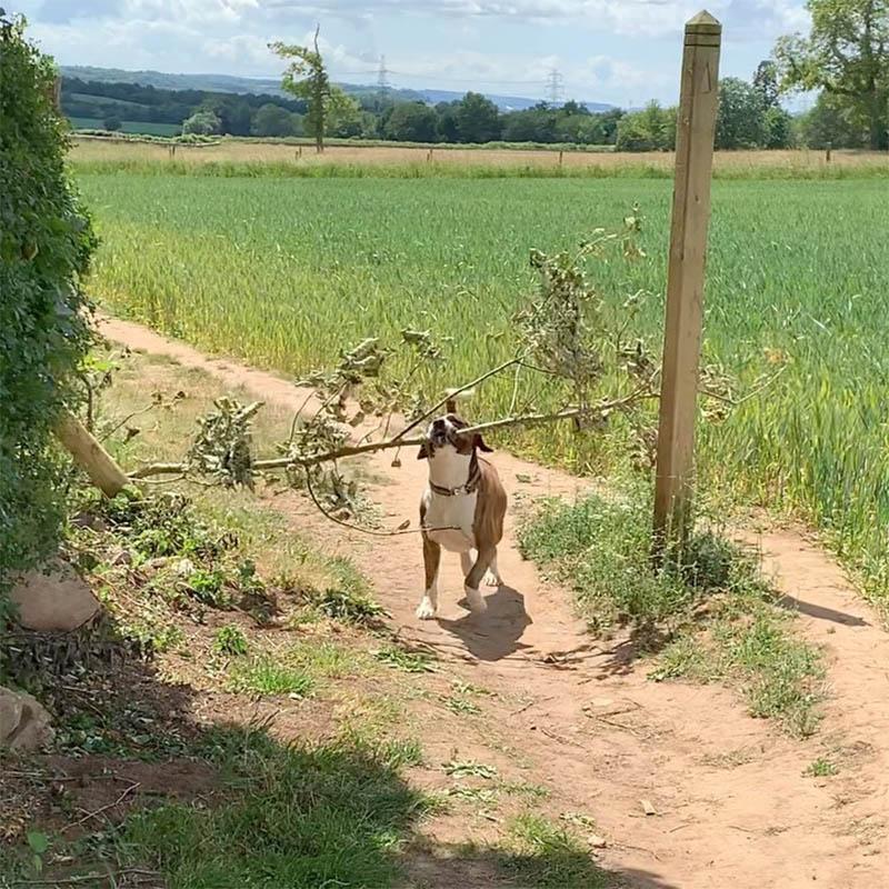 Snoop con una rama