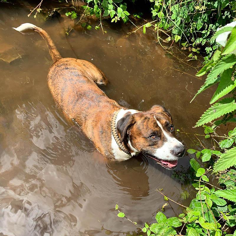 Hombre rescata perro calle