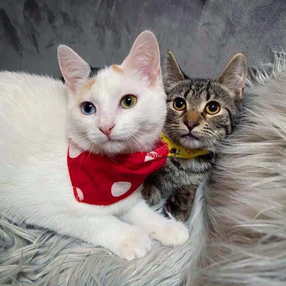 Dos gatitos timidos