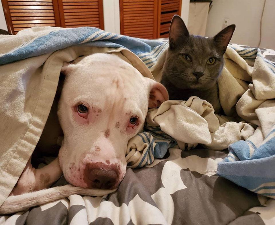 Familia llevó gatito acogida
