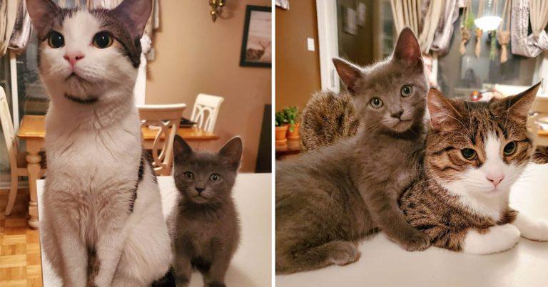 Familia llevó un gatito a casa para cuidarlo pero sus perros y gatos lo adoptaron